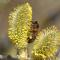 Plan national de mesures pour la santé des abeilles