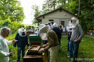Contrôle des ruches Dadant
